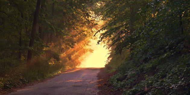 sunlight-166733_1280